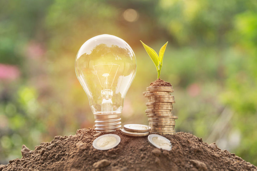 Close-up Coin Day Finance Focus On Foreground Fuel And Power Generation Glass - Material Light Bulb Lighting Equipment Nature No People Outdoors Plant Selective Focus Table Transparent Tree Wealth Wood - Material Yellow