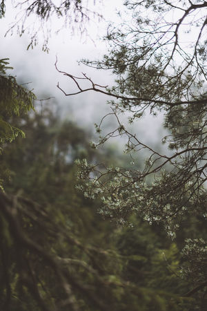 Lost In The Landscape Beauty In Nature Branch Close-up Day Forest Growth Nature No People Outdoors Plant Sky Tranquility Tree