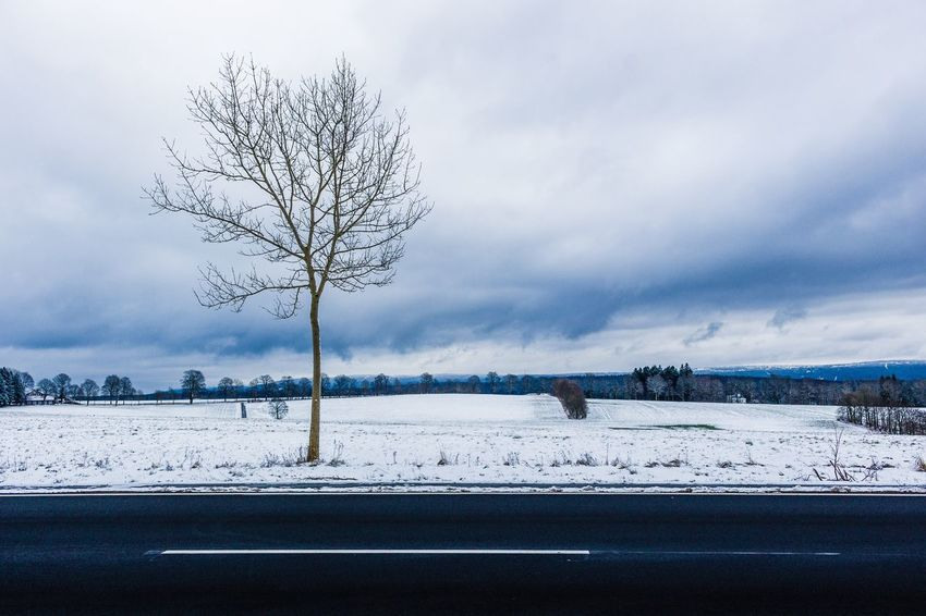 Winter Cold Temperature Snow Bare Tree Weather Tranquility Nature Landscape Tree Beauty In Nature Tranquil Scene Sky Outdoors Day Branch Scenics Frozen No People Shades Of Winter