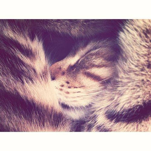 Rufus, My Cat