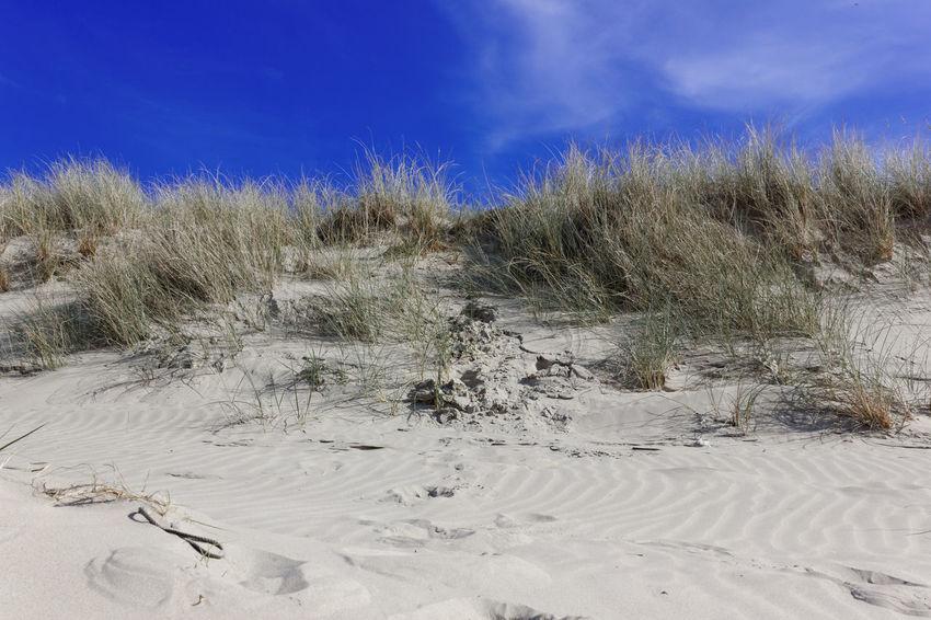 Sand Dune Beach Beauty In Nature Blue Sky Bray Dunes Dune Nature Outdoors Sand Sand Dune The Great Outdoors - 2017 EyeEm Awards