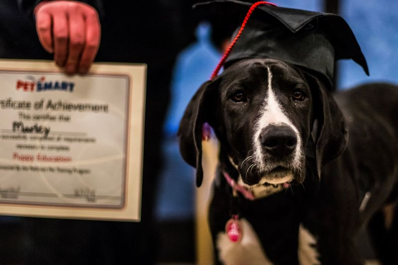 Graduation time 😁😁🎉!!! Dog Pets Real People One Animal Domestic Animals One Person Mammal Focus On Foreground Close-up Indoors