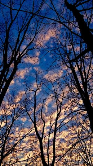 Tree Sky Bare Tree Branch Low Angle View Nature Silhouette Beauty In Nature Cloud - Sky No People Tranquility Outdoors Sunset Scenics Day