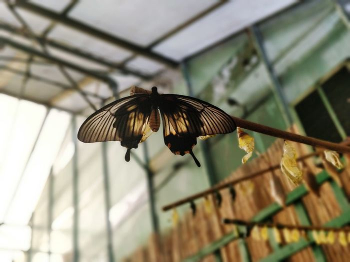 Low angle view of butterfly and cocoon