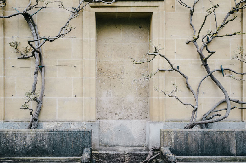 EyeEm Best Shots Architecture Branch Building Building Exterior Built Structure Creeper Plant Day Door Entrance Eye4photography  Growth House Nature No People Old Outdoors Plant Shootermag Tree Wall Wall - Building Feature Weathered