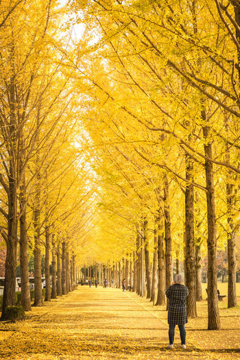 Rear view of woman walking on pathway amidst autumn trees