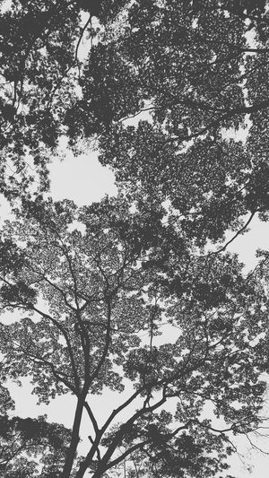 Blackandwhite Tree Silhouette Tree Branches Nature The Week Of Eyeem Vscocam Showcase July