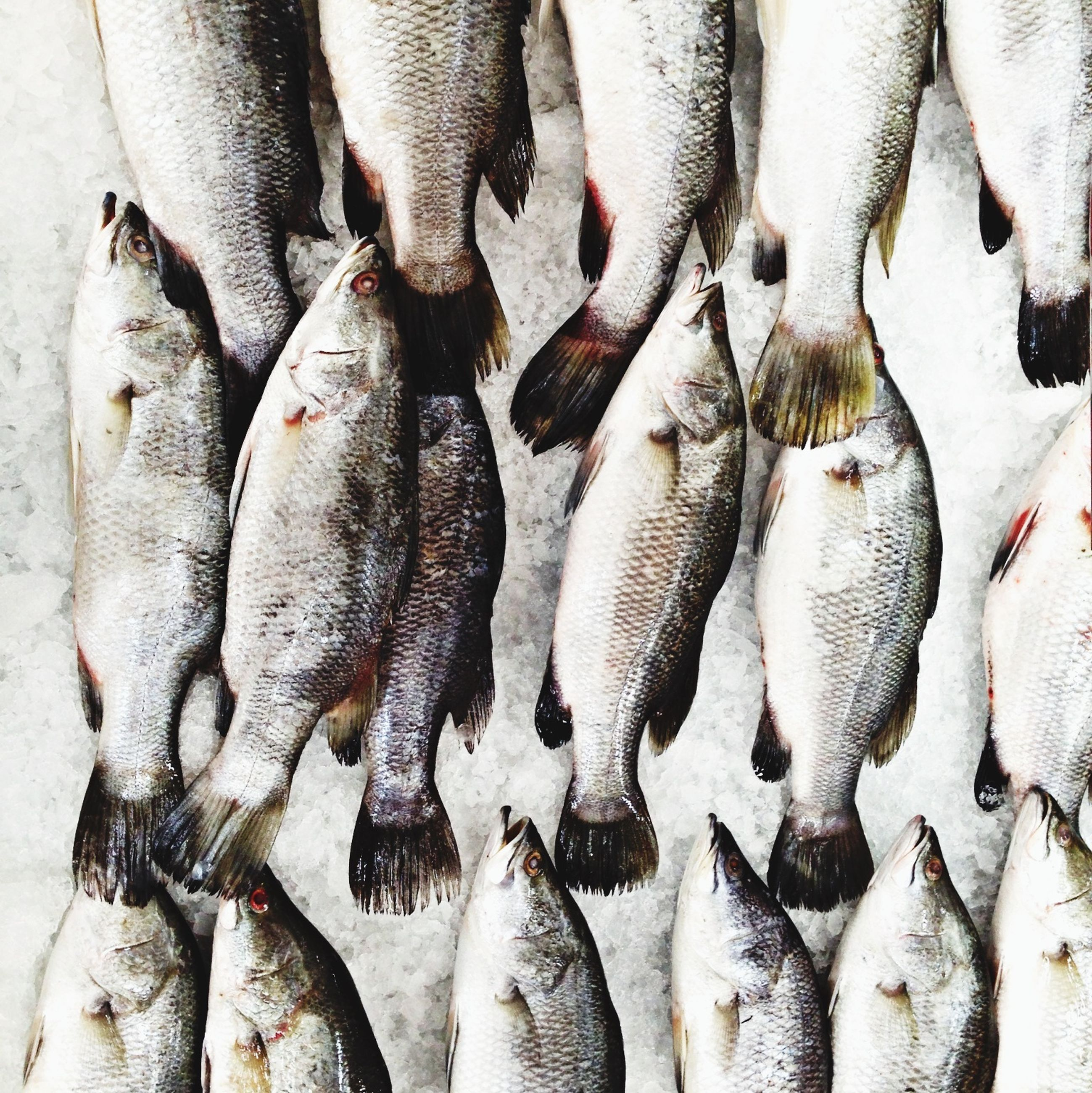 fish, dead animal, seafood, food and drink, for sale, abundance, healthy eating, animal themes, food, retail, market, market stall, raw food, large group of objects, high angle view, fish market, fishing industry, variation, freshness