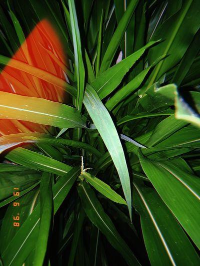 High angle view of fresh green leaf