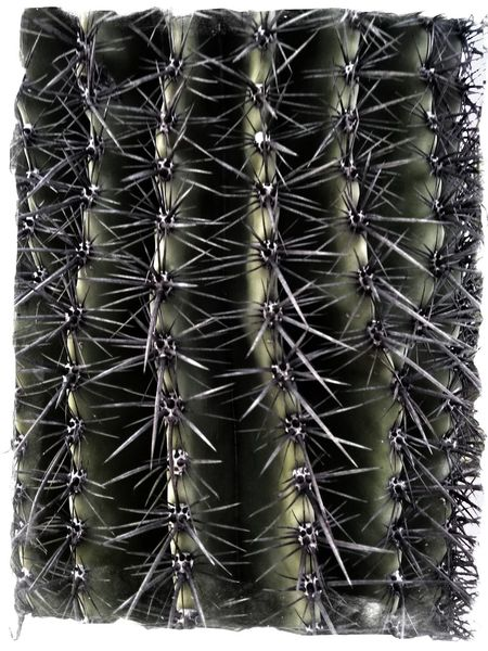 Auto Post Production Filter Backgrounds Cactus Close-up Day Full Frame Growth Metal Nature No People Outdoors Pattern Plant Sharp Sign Spiked Succulent Plant Thorn Transfer Print Warning Sign