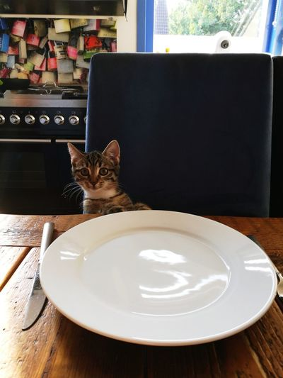 Pet Portraits Where Is My Salmon? Focussed On Food Indoors  Plate No People Table Food And Drink Day Close-up Ready-to-eat Pawsabove The Table Cat One Animal Huawei P9 Leica Cats Of EyeEm Ready For Dinner
