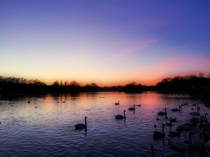 The Great Outdoors - 2015 EyeEm Awards Hyde Park London River Sunset Nature Swans