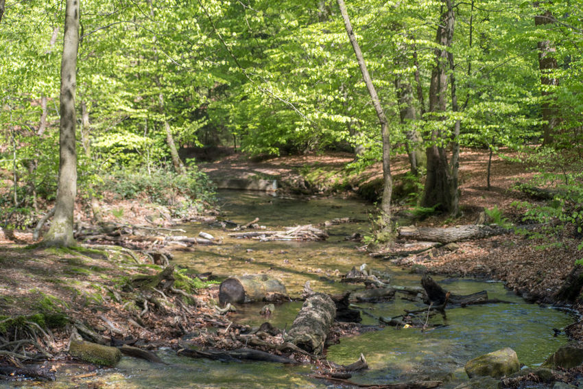Woodland walk on a bright day in May Beauty Of Nature Brook Day Freshness Growth HDR High Angle View Nature Nature_collection No People Old Lens Reflections In The Water Spring Springtime Tree Woodland Walk
