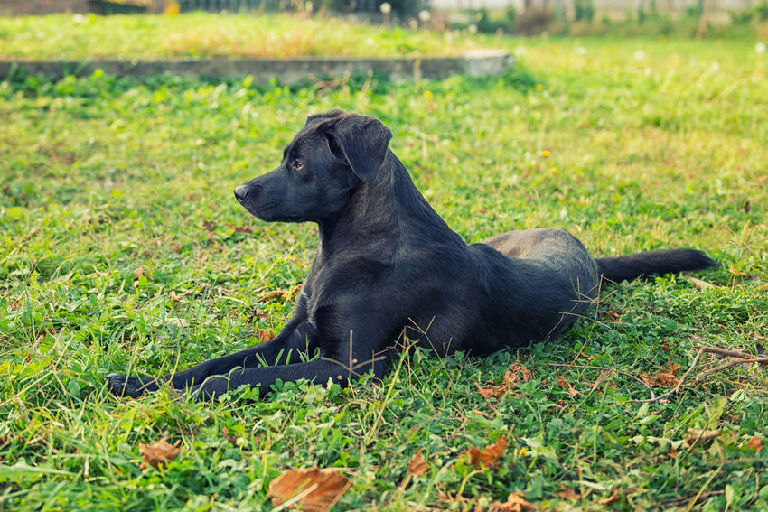 Relaxing dog Animal Themes Black Color Day Dog Dog Waiting Domestic Animals Field Grass Mammal Nature No People One Animal Outdoors Pets Relaxing Dog Sitting