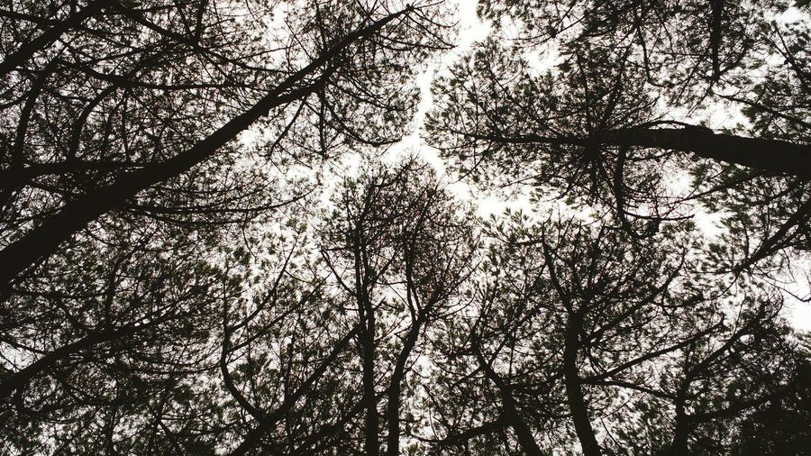 No People Tree Full Frame Nature Outdoors Santander