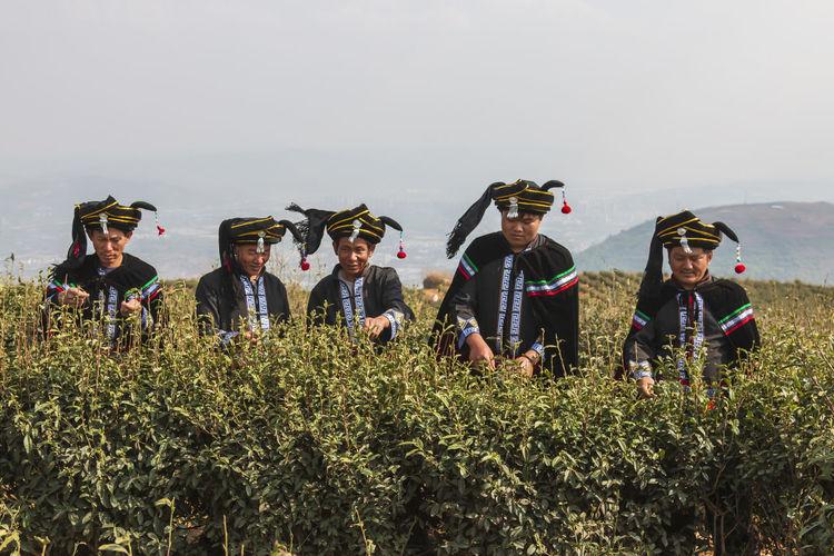 Yiliang, China - March 24, 2019: Two Black Yi men dressed in a traditional attire picking up tea leaves in Baohong mountain, Yiliang in Yunnan Yiliang Kunming, China Tea Tea Leaves Tea Harvesting Yi Minority Ethnic Group China ASIA Tea Garden Tea Production Tea Processing Puer Tea Oolong Tea