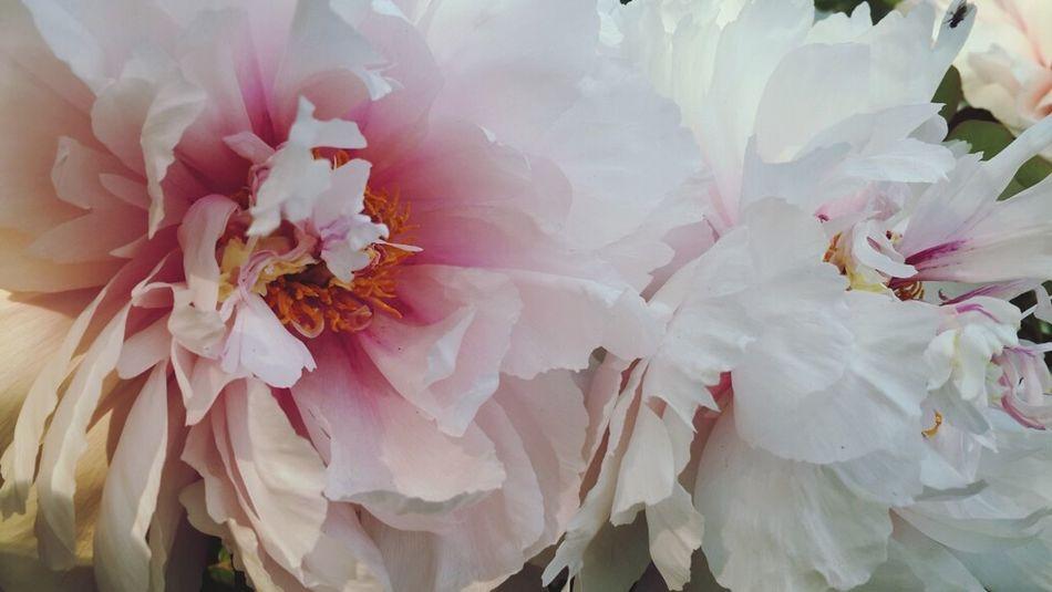 Spring! Flower