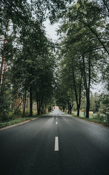 Road amidst trees