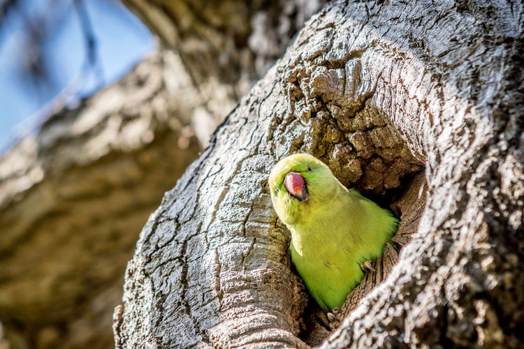 Green Parrot in