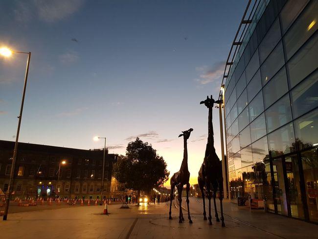 Omni Center. Girrafe  Girrafes City Politics And Government Sky Architecture Built Structure