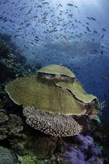 Healthy corals in Komodo Diving Animal Themes Animals In The Wild Beauty In Nature Blue Close-up Coral Day Fish Fishes Large Group Of Animals Nature No People Outdoors Rock - Object Sea Sea Life Swimming UnderSea Underwater Underwater Photography Water