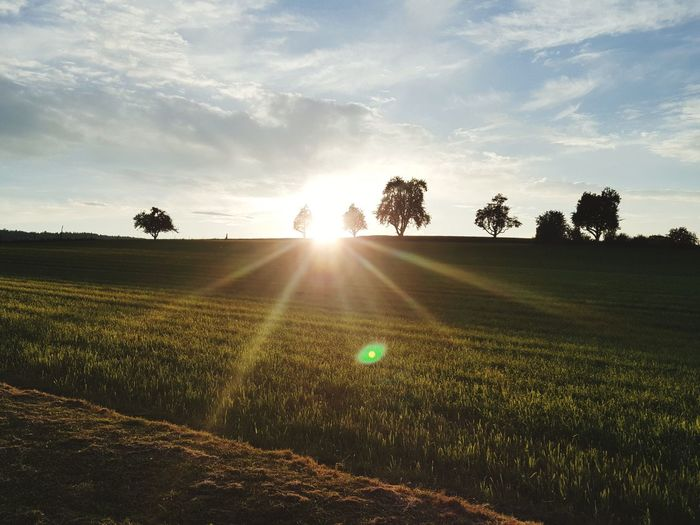 Soleil Sunshine