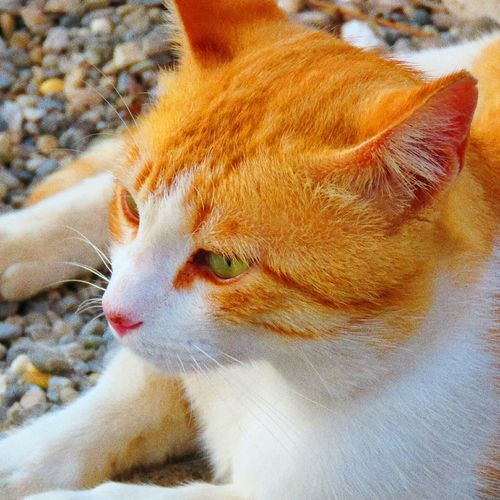 One Animal Domestic Cat Outdoors Nature Day Pets Domestic Animals Animal Themes Close-up Mammal No People