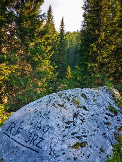 18.8.1916 140 R.F.  3 RZ. Campomuletto Asiago Highland Vicenza Italy Travel Photography Travel Voyage Traveling Mobile Photography Fine Art Photography Inscriptions On A Massive Boulder Showcase July