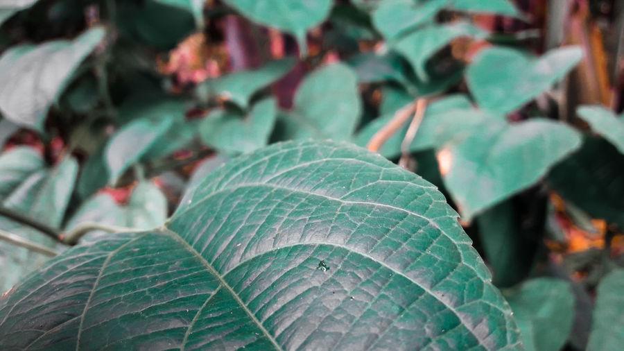 Green Green Color Nature Blue Nature_collection Colorful Colors Art ArtWork Paint HDR Leaf Flower Close-up Green Color Plant Tea Crop Tea Leaves Green Tea Black Tea In Bloom Afternoon Tea