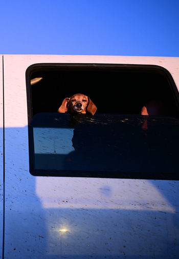 Portrait of woman photographing through car window