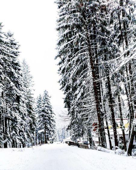 Snow Winter BeautifulnatureCold Temperature inlovewiththisview First Eyeem Photo