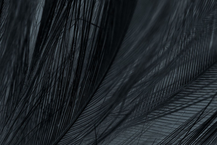 Pattern Close-up No People Indoors  Full Frame Textile Nature Textured  Plant Selective Focus Day High Angle View Backgrounds Hair Bed Detail Natural Pattern Feather  Palm Leaf Softness