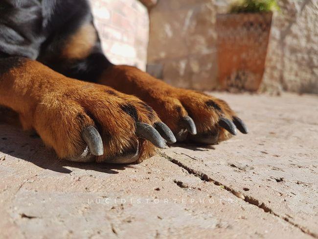 One Animal Mammal Pets Animal LegFeet Dog Domestic Animals Eboli Lucidistortephoto Samsung Galaxy S7 S7Edgecamera