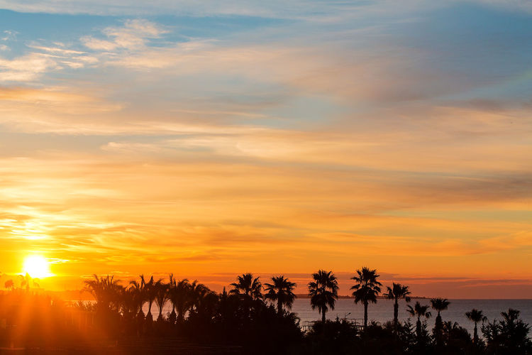 Silhouette trees on beach against orange sky