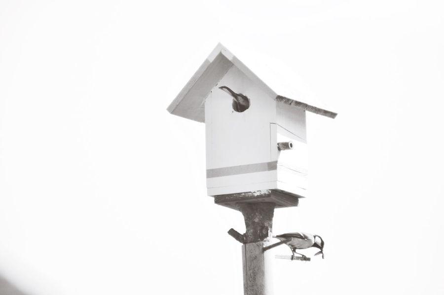 シジュウカラ Birdhouse Birds Birdwatching