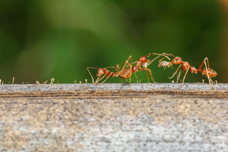 Close-up of ant on wall