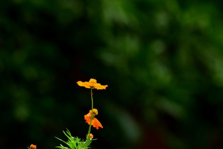 ..aLwaYs.. cOmForTabLe.. undeR.. yOuR... sHade... Flower Nature Beauty In Nature Orange Color Nature Reserve Outdoors Plant Petal Green Color Flower Head Simple Quiet Love Softness Every Flower Is A Soul Togetherness Light And Dark Colorful Fragility No People Freshness Landscape Day Kerala