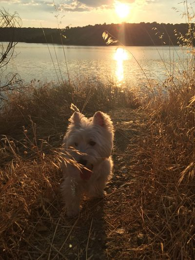 #westies #westhighlandwhiteterrier Tulawesty Nature Photography Dog Nature_collection