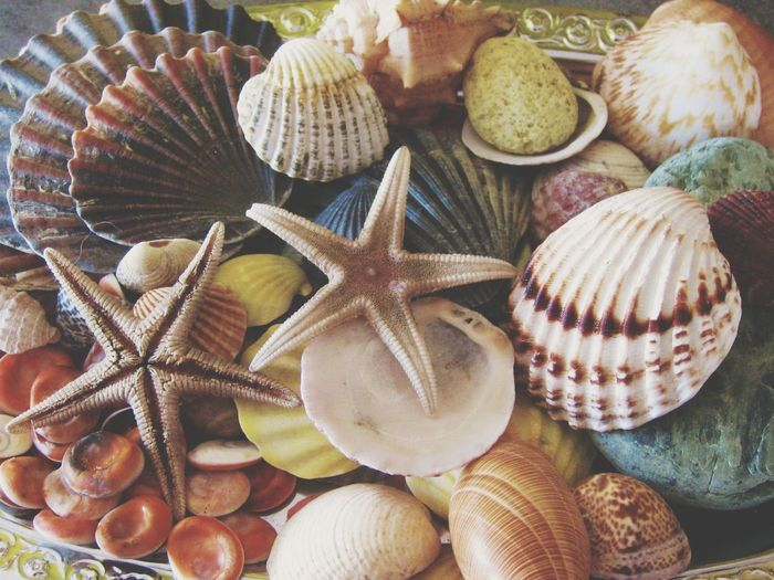 Be. Ready. EyeEm Selects Playa Seashell No People Close-up Sea Life Day Indoors  Beach Sea Animal Themes UnderSea EyeEmNewHere