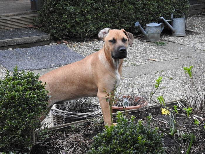 Dog My Dog Backyard Gardening At Home Taking Photos Relaxing Enjoying Life Nikon P900 Urban Spring Fever