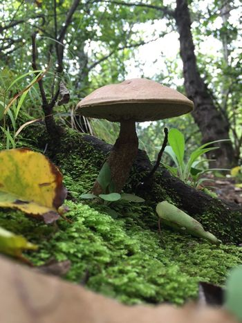 Plant Growth Tree Vegetable Mushroom Food Nature Green Color Fungus Selective Focus No People Land Day Beauty In Nature Moss Leaf Close-up Plant Part Food And Drink Forest Outdoors Toadstool