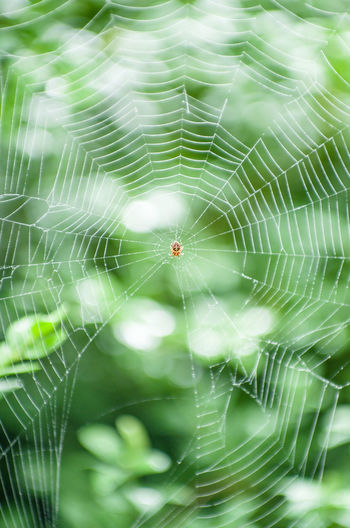 Backgrounds Beauty In Nature Close-up Complexity Day Focus On Foreground Fragility Full Frame Green Color Growth Natural Pattern Nature No People Outdoors Selective Focus Spider Spider Web Spinning Web