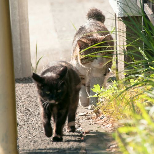 世界猫の日 はちわれデー キジシロ サビ猫 自由猫 野良猫 ねこ ハチワレ 地域猫 のらねこ部 僕らの居場所は言わにゃいで 写真で伝えたい私の世界 Cat♡ Cats Of EyeEm Cats Lovers  野良猫ウォッチング 猫の日 ファインダー越しの私の世界 ファインダーは私のキャンパス EyeEm Best Shots Cat Watching Stray Cat Cat Animal Themes