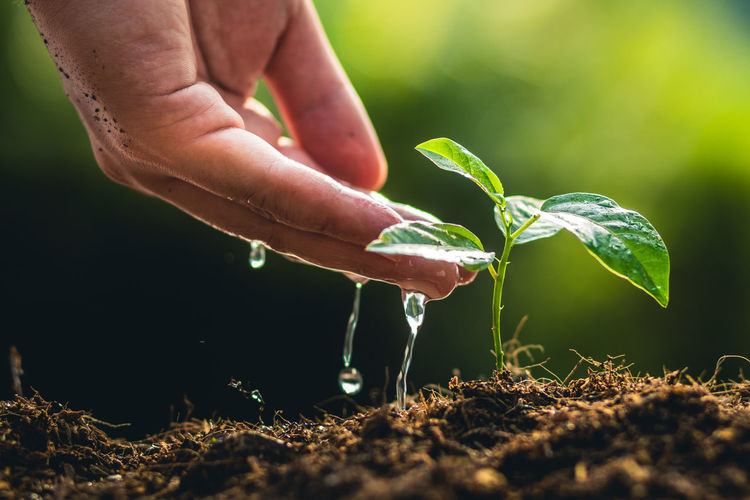 Planting trees growth passion fruit and hand Watering in nature Light and background Body Part Care Close-up Day Finger Gardening Green Color Growth Hand Holding Human Body Part Human Finger Human Hand Leaf Lifestyles Nature One Person Outdoors Plant Plant Part Real People Unrecognizable Person