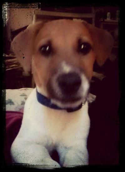 Look at this pup!
