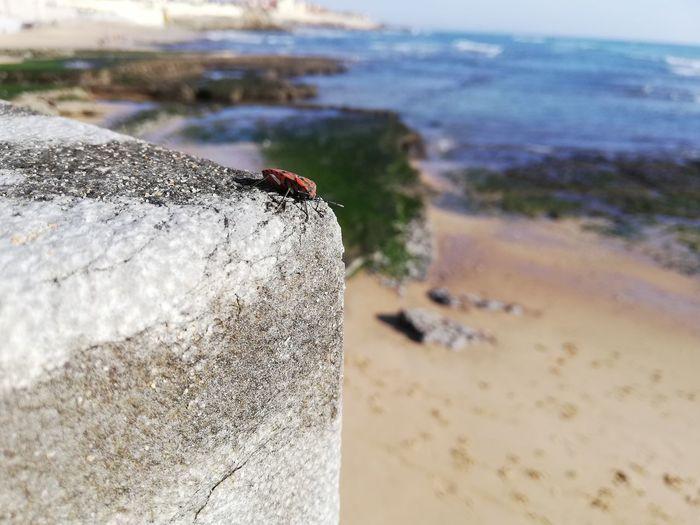 Bug Water Sea