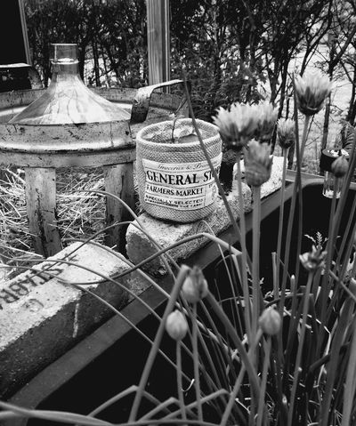 Close-up Greenhouse Rustic Style Decor Blackandwhite Interior Old Stuff Old Tiles Old Bottle Tiles Chives Burlap Sack