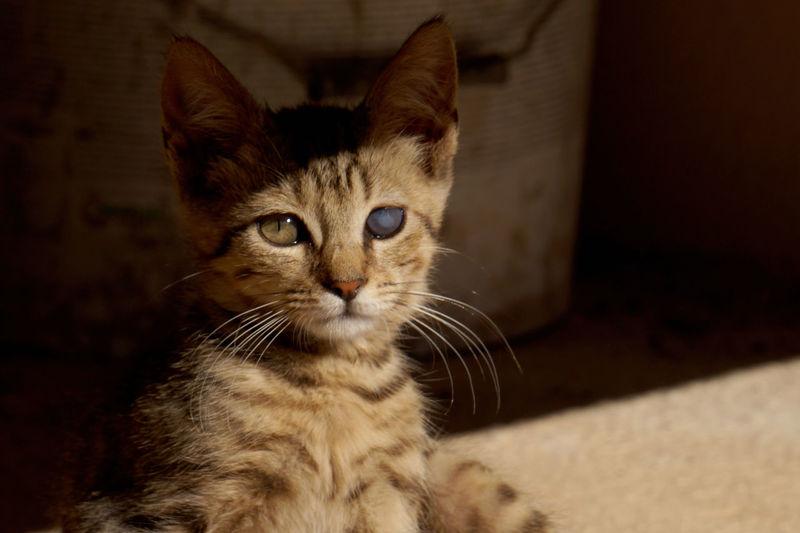 TheWeekOnEyeEM BlindCat Animal Eye Beauty In Nature Cat Domestic Domestic Animals Domestic Cat Kitten Looking At Camera One Animal Pets Portrait EyeEmNewHere