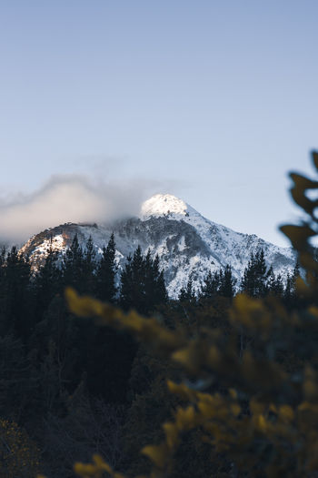 Snow capped mountain top view from between the trees