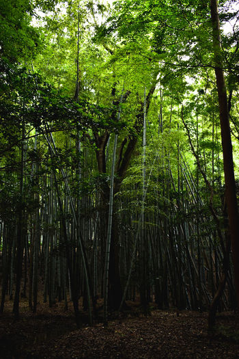 Tree Forest